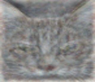 Zo ziet een kat eruit volgens een computer na het analyseren van YouTube